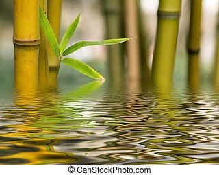 agua, bambú, reflexión