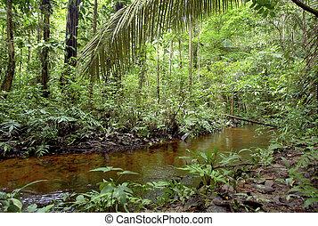 agua, vegetación, amazon, corriente