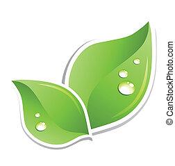 agua, verde, vector, hoja, droplets.