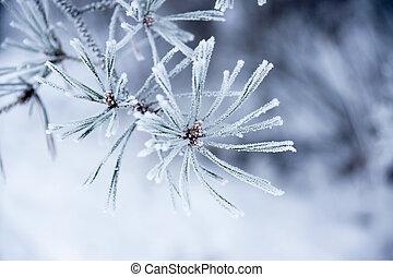 Agujas en invierno