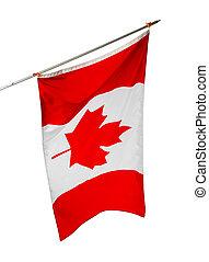 aislado, bandera canadá, plano de fondo, nacional, blanco