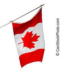 aislado, bandera, nacional, plano de fondo, blanco, canadá