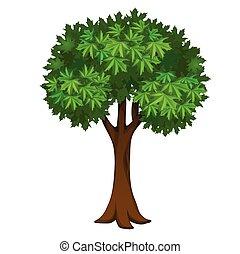 aislado, illustration., hojas, primer plano, vector, arce, árbol verde, caricatura, fondo., blanco