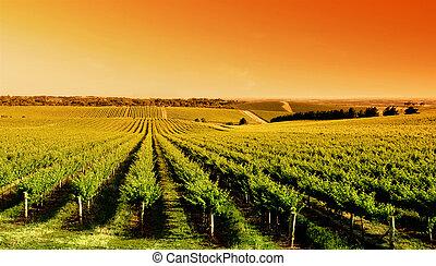 Al amanecer del viñedo