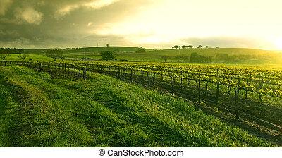 Al amanecer sobre el viñedo