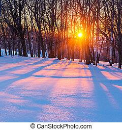 Al atardecer en el bosque de invierno