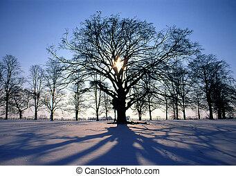 Al atardecer en invierno