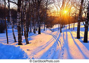 Al atardecer en un parque de invierno