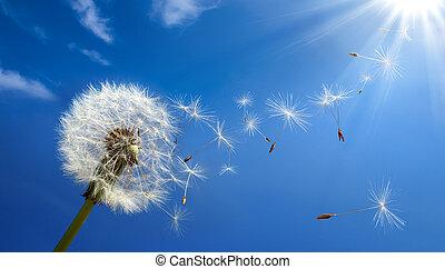 alergia, primavera, concepto