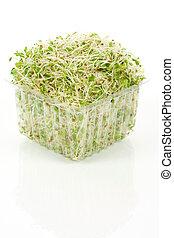 Alfalfa cole