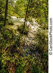 Algas cubiertas de pantano