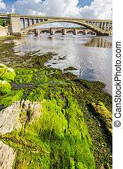 Algas verdes bajo puentes en Berwick-upon-Tweed