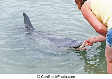 alimenta, dolphing, pez