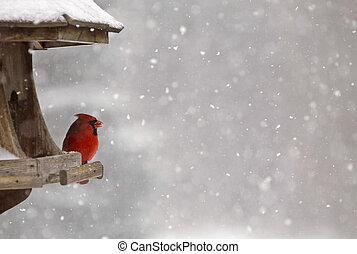 alimentador del pájaro, cardinal