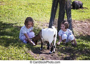 Alimentando a la cabra 6
