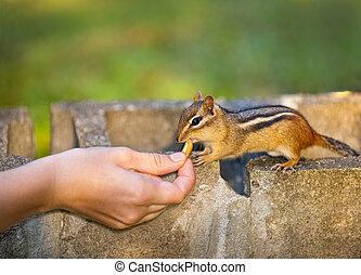 Alimentando la vida salvaje