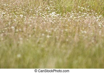 Alta hierba salvaje