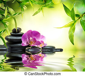 alternativa, masaje, jardín