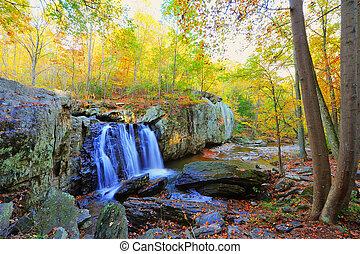 alto, foto, dinámico, bajas, otoño, gama, kilgore, maryland