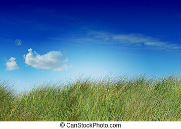 Alto y verde cielo azul y una nube la imagen está saturada, la nube está en el lado izquierdo, la hierba está sin cortar