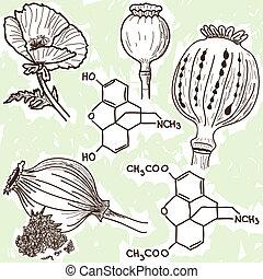 amapola, -, opio, ilustración, narcóticos