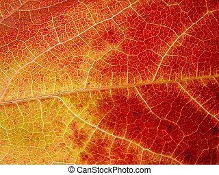 Amarillo, leer hojas