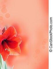amaryllis, flor, plano de fondo