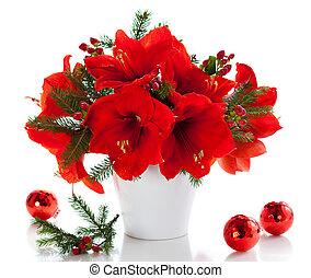 amaryllis, navidad, arreglo