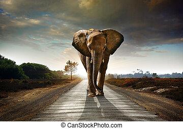 ambulante, elefante