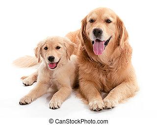 Amigos de perros