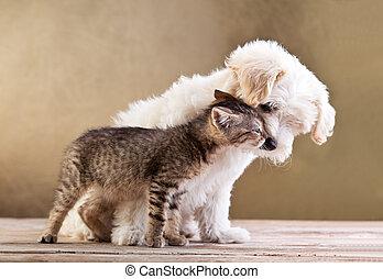 amigos, -, perro, juntos, gato