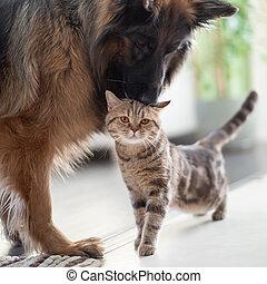 amistad, juntos, gato, perro, entre, pets., indoors.