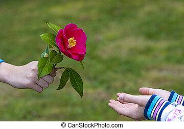 amor, dar, símbolo, manos, flores, amistad, niños