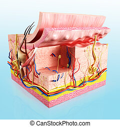 anatomía, capa, piel humana