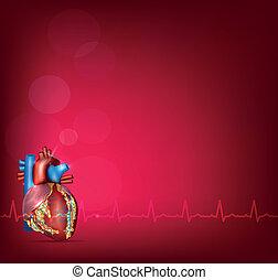 Anatomía cardíaca humana en un fondo rojo brillante