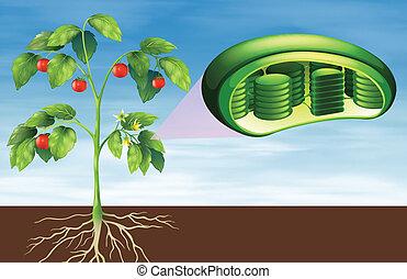 Anatomía celular de planta