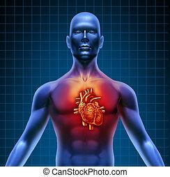 anatomía, corazón, torso, rojo, humano