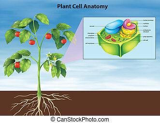 Anatomía de la célula vegetal