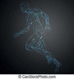 anatomía, vector, músculo humano
