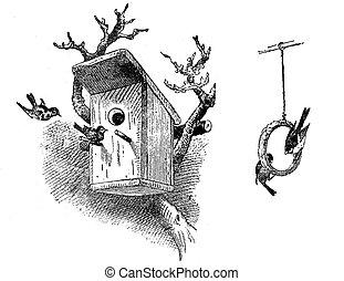 anillo, alimento, casa, grabado, pájaro