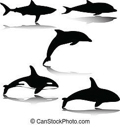 Animal en ilustración marina