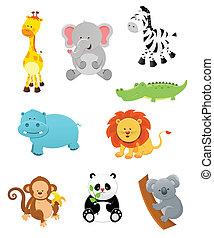 animales, safari