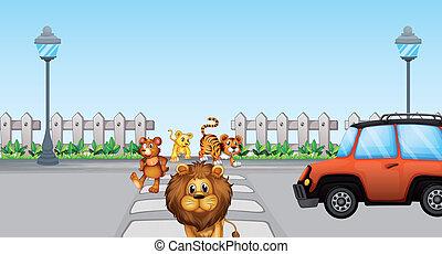 Animales salvajes cruzando y un auto en la carretera