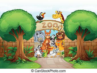 animales, zoo
