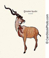 antílope, dibujado, kudu más grande, mano, vector, illustration.