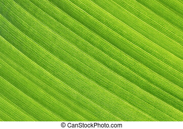 Antecedente abstracto de hoja tropical