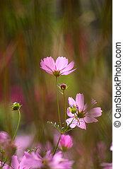 Antecedentes de flores rosas