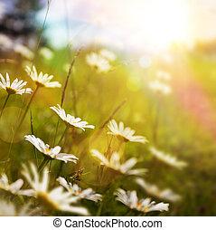Antecedentes de naturaleza abstracta con flor de verano en la hierba