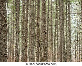 Antecedentes forestales