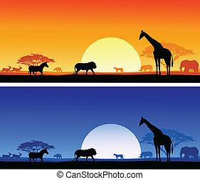 Antecedentes Safari